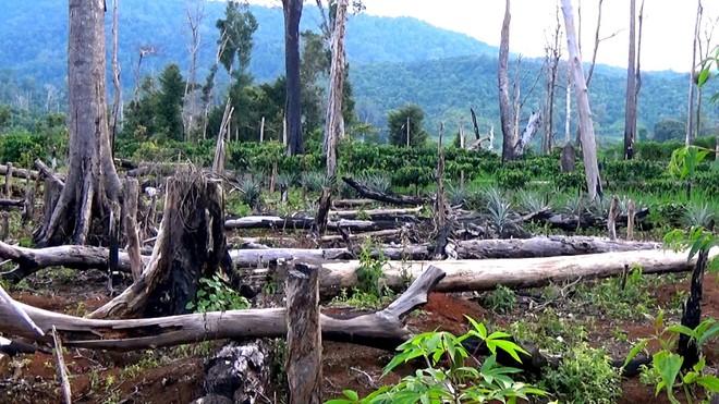 Không thể để các địa phương ồ ạt xin phá rừng làm kinh tế ảnh 1