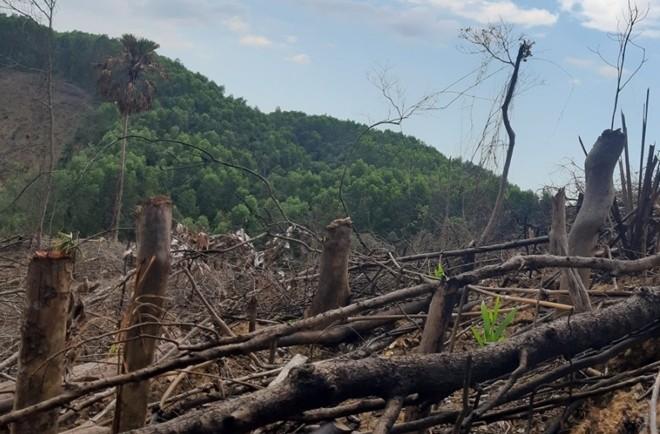 Không thể để các địa phương ồ ạt xin phá rừng làm kinh tế ảnh 2