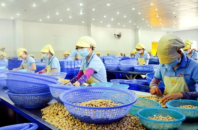 Việt Nam: Kinh tế có khả năng phục hồi cao và năng lực sản xuất tăng ảnh 1