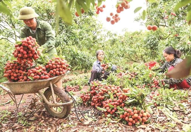 """Hỗ trợ tiêu thụ nông sản: Đừng hạ thấp giá trị hàng hóa khi """"giải cứu"""" tức thời ảnh 1"""