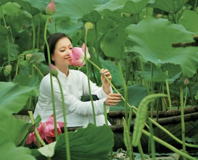 Hoa sen trong tâm hồn người Hà Nội ảnh 3