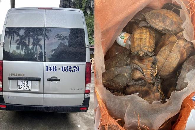 Phát hiện 34 cá thể rùa đi 'du lịch' bằng xe 16 chỗ ảnh 1