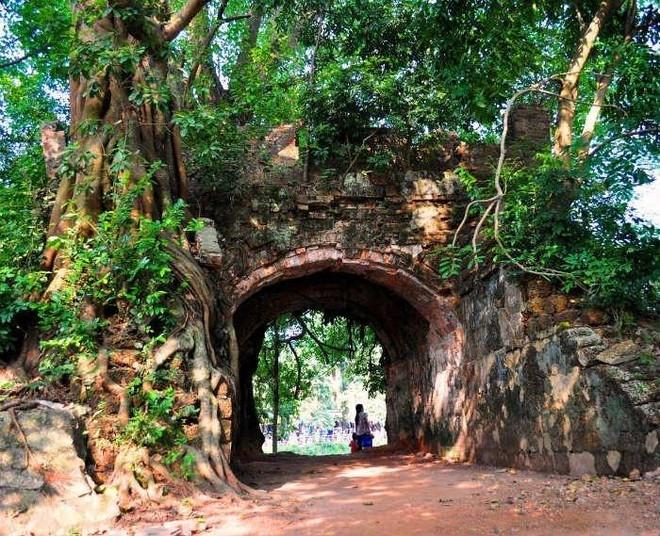 Hạn chế trồng cây lâu năm kích thước lớn trong khuôn viên thành cổ Sơn Tây ảnh 1