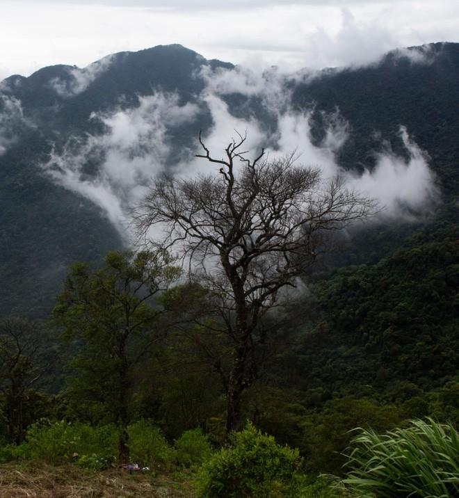 Đến Tam Đảo những ngày mờ sương, thả trôi tâm hồn vào sự thư thái ảnh 2