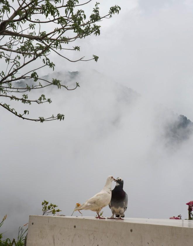 Đến Tam Đảo những ngày mờ sương, thả trôi tâm hồn vào sự thư thái ảnh 4