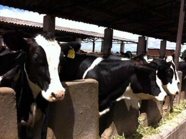 Xây dựng vùng chăn nuôi bò sữa bền vững tại Hà Nam ảnh 1