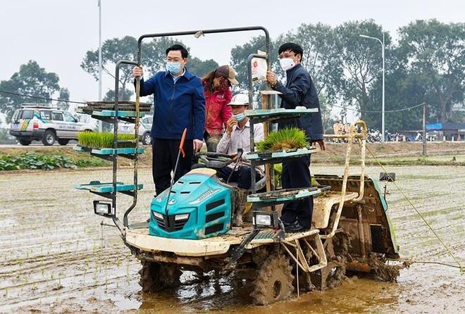 Bí thư, Chủ tịch Hà Nội cùng xuống đồng, đứng máy cấy lúa động viên bà con nông dân ảnh 1