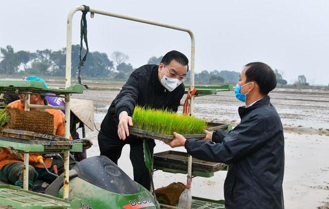 Bí thư, Chủ tịch Hà Nội cùng xuống đồng, đứng máy cấy lúa động viên bà con nông dân ảnh 2