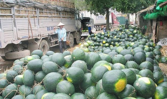 Tránh thối hỏng, ùn ứ, sẽ tăng xuất khẩu nông sản qua hàng không, đường sắt ảnh 1