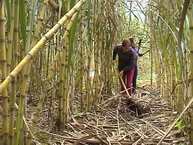 11 nhà máy đường đóng cửa, nghi do đường Thái Lan bán phá giá vào Việt Nam ảnh 1