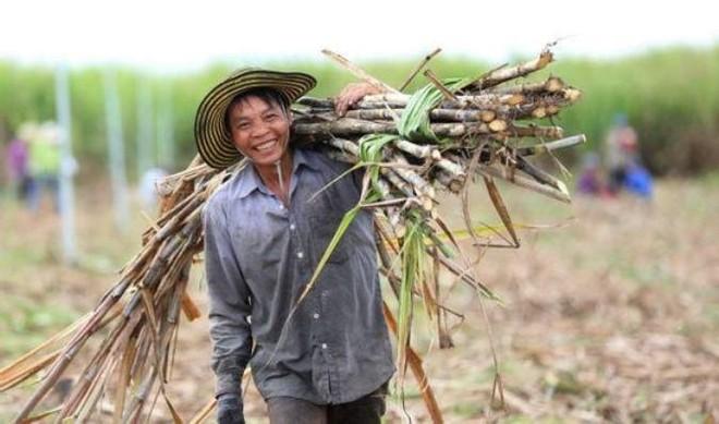 Việt Nam áp thuế 47,64% trong 5 năm đối với đường mía Thái Lan ảnh 1