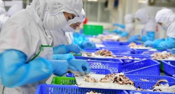 Doanh nghiệp thủy sản lo gãy đổ chuỗi sản xuất, xuất khẩu ảnh 1