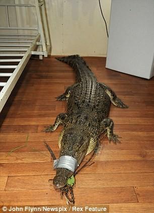 Thợ câu sợ chết khiếp khi buộc phải qua đêm cùng cá sấu ảnh 2