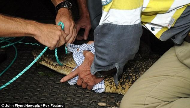 Thợ câu sợ chết khiếp khi buộc phải qua đêm cùng cá sấu ảnh 4