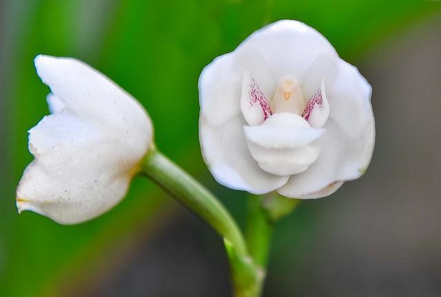6 loài hoa giống động vật một cách kì lạ ảnh 16