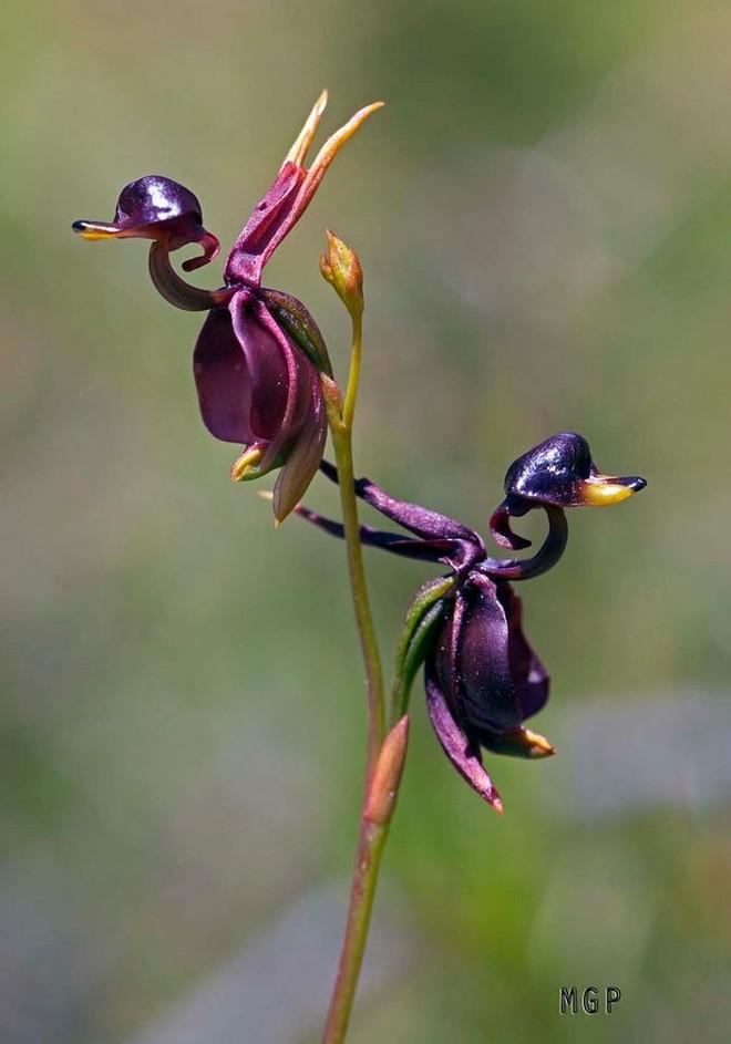 6 loài hoa giống động vật một cách kì lạ ảnh 18