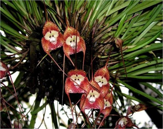 6 loài hoa giống động vật một cách kì lạ ảnh 2