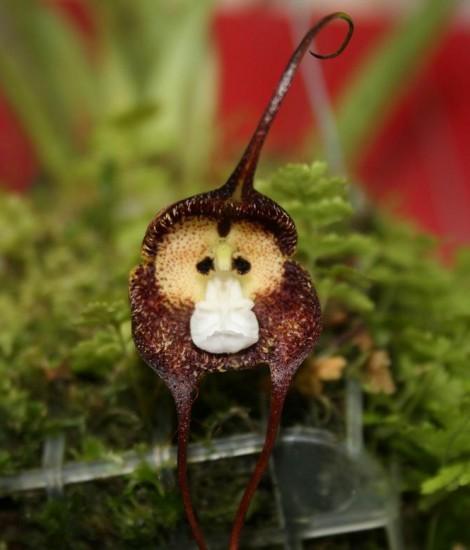6 loài hoa giống động vật một cách kì lạ ảnh 4