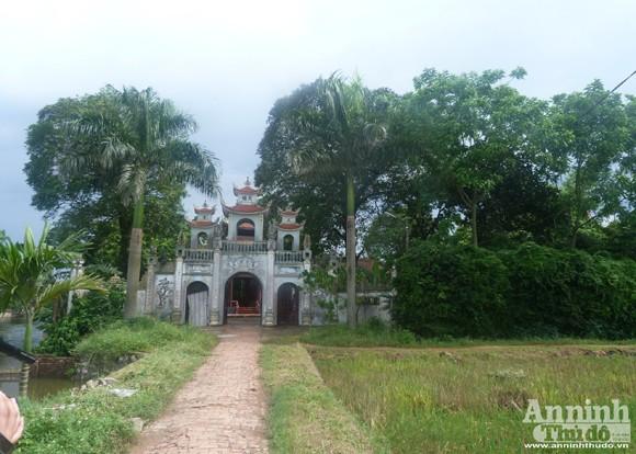 Đêm mưa, cây sưa 70 năm tuổi bị đốn hạ giữa vườn chùa ảnh 1
