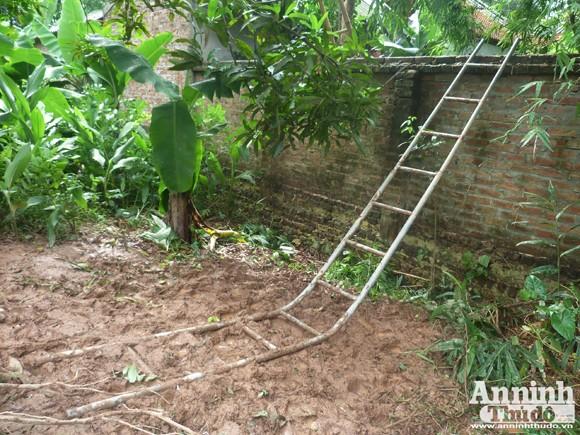 Đêm mưa, cây sưa 70 năm tuổi bị đốn hạ giữa vườn chùa ảnh 4