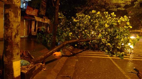 Mưa to gió lớn, Hà Nội đổ - gãy cả trăm cây đại thụ ảnh 2
