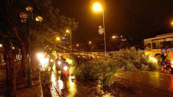 Mưa to gió lớn, Hà Nội đổ - gãy cả trăm cây đại thụ ảnh 1