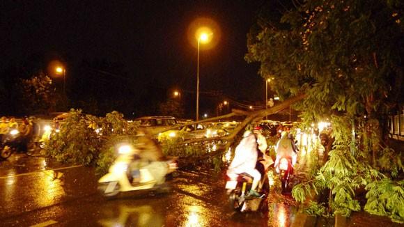 Mưa to gió lớn, Hà Nội đổ - gãy cả trăm cây đại thụ ảnh 5