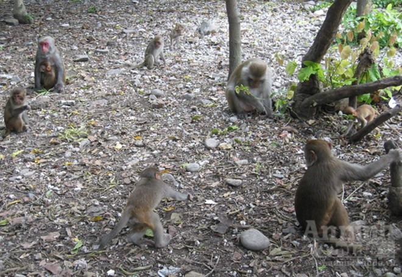 Giáp mặt con khỉ Thái giám (P2)