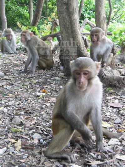 Giáp mặt con khỉ Thái giám (P2) ảnh 4