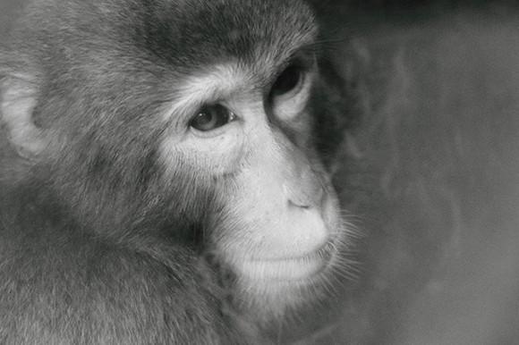 Giáp mặt con khỉ Thái giám (P2) ảnh 3