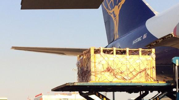 """200 con bò sữa """"cưỡi"""" phi cơ, đáp xuống phi trường Tân Sơn Nhất ảnh 1"""