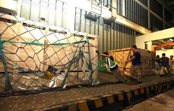 Vinamilk tiếp tục nhập bò sữa cao sản từ Úc về Việt Nam ảnh 3