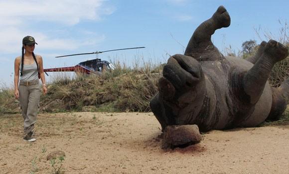 """""""Bống"""" Hồng Nhung sốc nặng khi thấy tê giác bị giết hại, cưa trộm sừng ảnh 2"""
