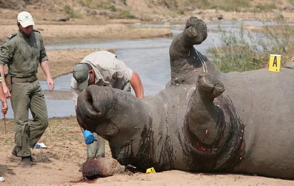 """""""Bống"""" Hồng Nhung sốc nặng khi thấy tê giác bị giết hại, cưa trộm sừng ảnh 4"""