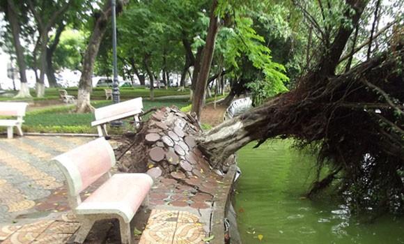 Hà Nội: Cây lớn bật gốc đổ vào nhà dân ảnh 6