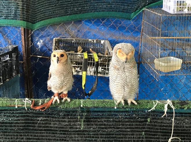 Giải cứu 9 con chim hoang dã nuôi nhốt tại nhà riêng ảnh 1