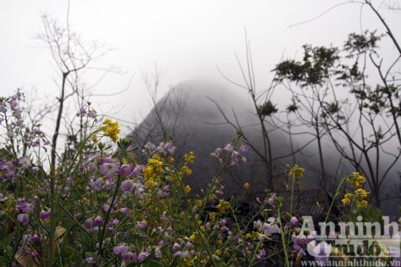 Kỳ diệu vén mây tìm cỏ, vén đá tìm nước ảnh 3