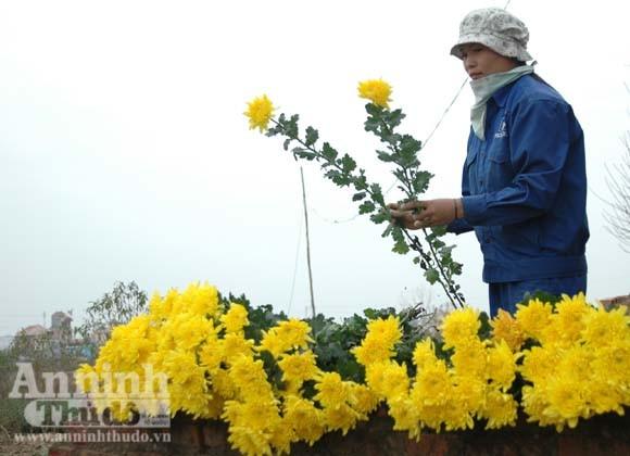 """""""Tôi được tặng cả cánh đồng hoa bao la"""" ảnh 3"""