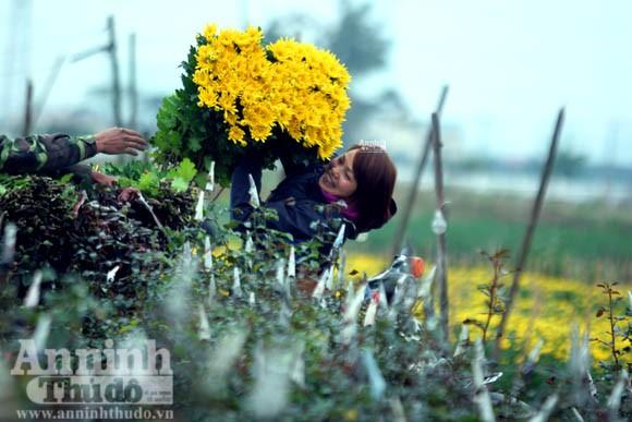 """""""Tôi được tặng cả cánh đồng hoa bao la"""" ảnh 9"""