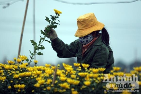 """""""Tôi được tặng cả cánh đồng hoa bao la"""" ảnh 10"""