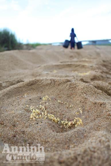 Gieo mầm sống trên triền cát ảnh 14