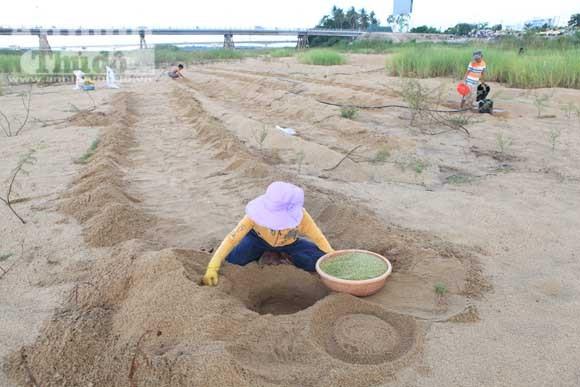 Gieo mầm sống trên triền cát ảnh 13