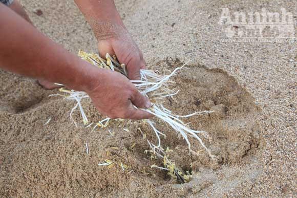 Gieo mầm sống trên triền cát ảnh 12