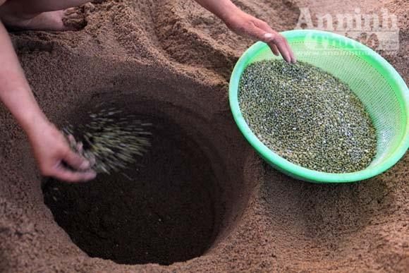 Gieo mầm sống trên triền cát ảnh 6