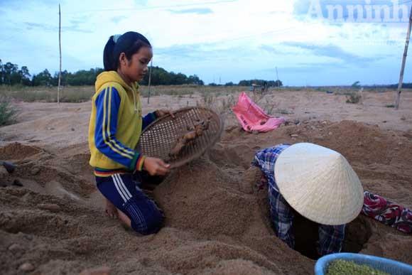 Gieo mầm sống trên triền cát ảnh 5