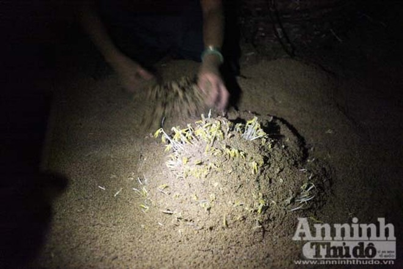 Gieo mầm sống trên triền cát ảnh 2