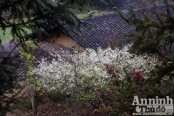 Tiếng Xuân từ những hàng rào đá ảnh 12