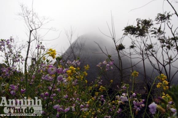 Tiếng Xuân từ những hàng rào đá ảnh 6