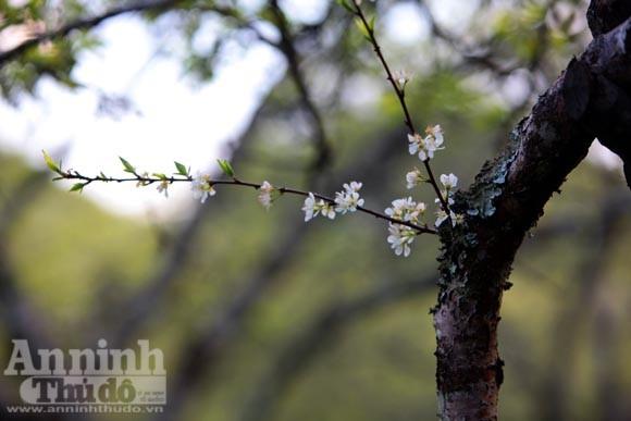 """Vườn """"địa đàng"""" mầm xuân đang nở cánh biếc ảnh 12"""