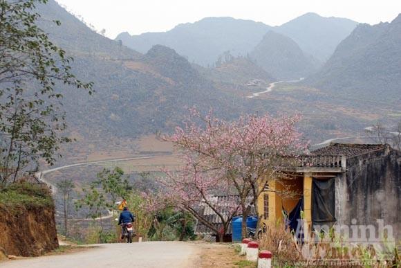 Trải nghiệm cung bậc mùa xuân vùng đá núi ảnh 5